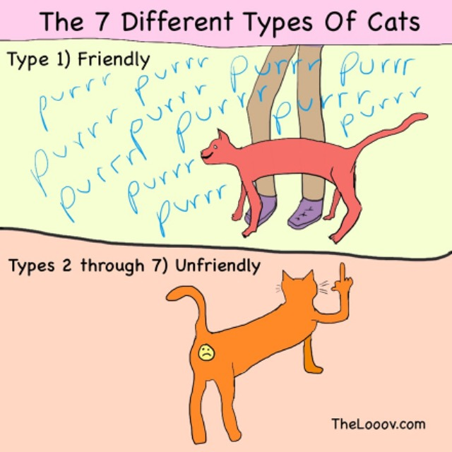 7 different types of cats post1